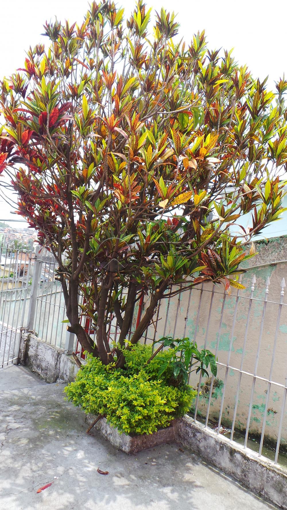Casa em Jardim Aliança, Osasco - SP