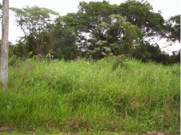 Alugar Terreno / Terreno em Cotia. apenas R$ 90.000,00